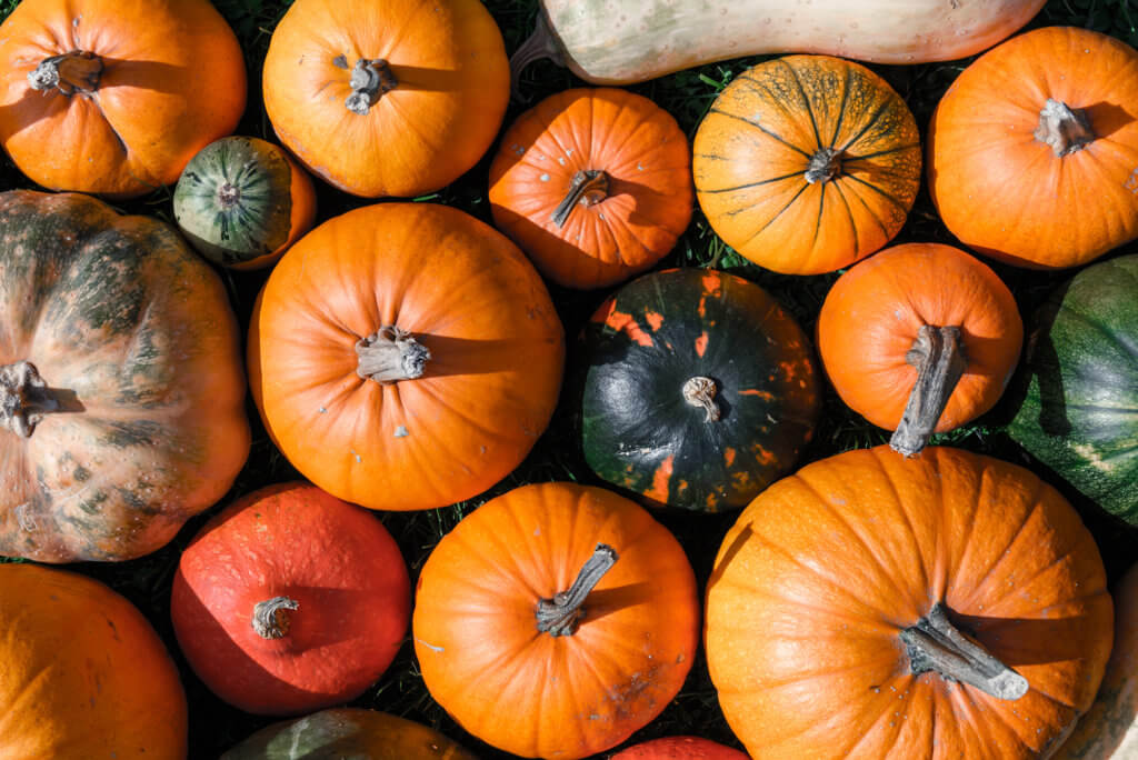 Different kind of pumpkins closeup